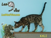 Kali Site Web (2)