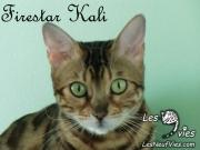 Kali Site Web (4)