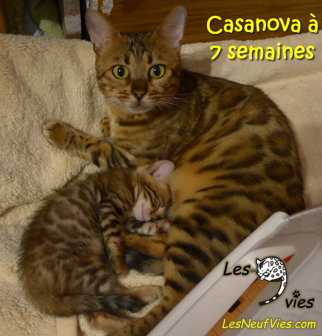 casanova chat How is it that such an old song can fit chat so well xd tom and jerry - casanova cat - duration: 2:48 best cartoons 2,208,739 views 2:48.